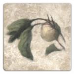 Cynara Apricot Accent Tile