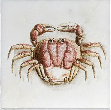 Fiddler Crab Ocean Life Accent