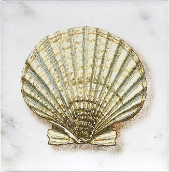Scallop Ocean Life Accent
