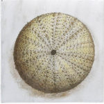 Sea Urchin Ocean Life Accent