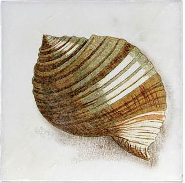 Shell 4 Ocean Life Accent