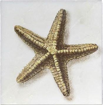Starfish Ocean Life Accent